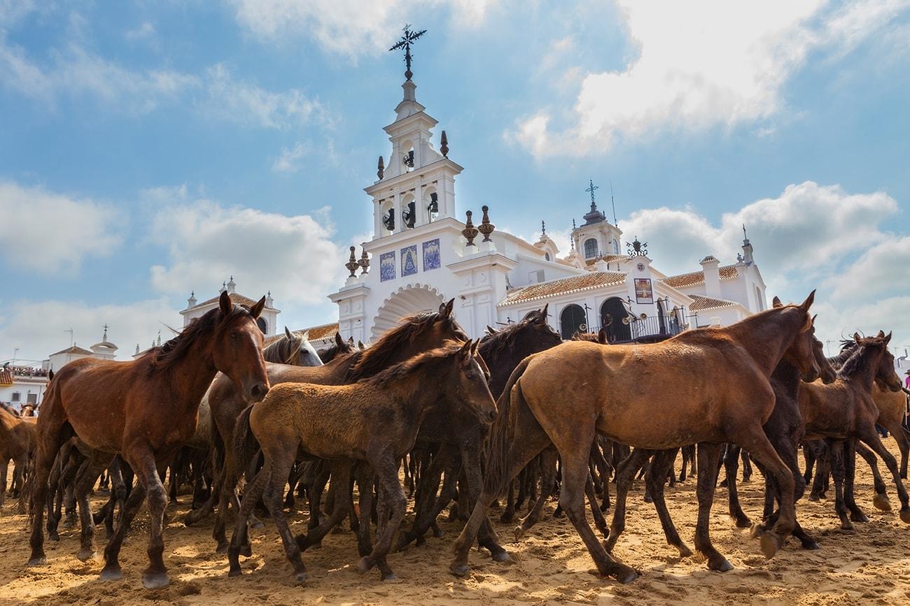 El Rocio Horses