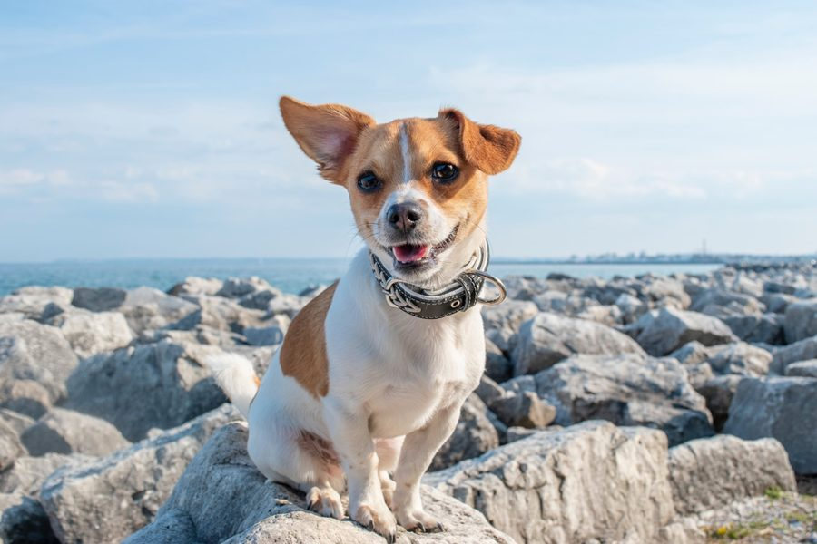 Marbella for dog lovers