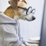 Smart working dog using computer typing on laptop keyboard.