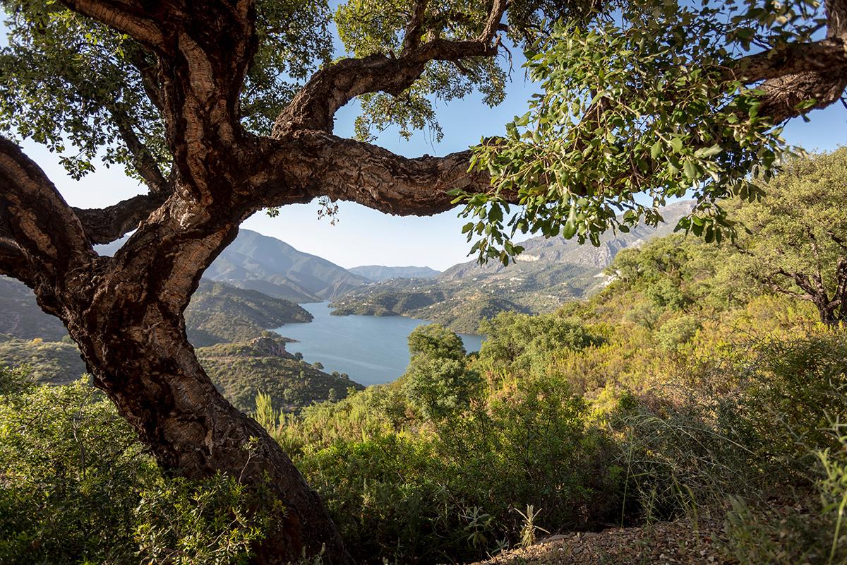 Lake Istán adjoins El real de la Quinta