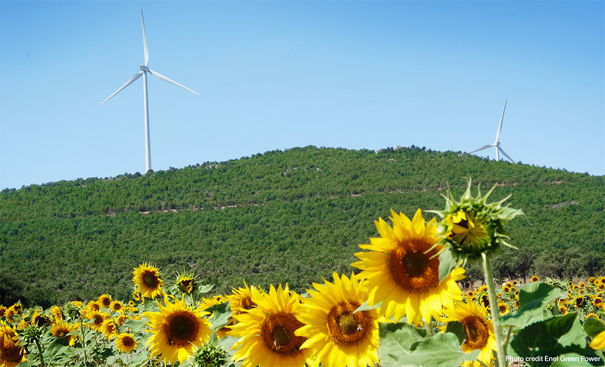 Sunflowers and wind farms
