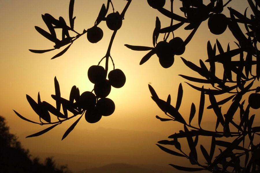 The Top 5 Olive Mills to Visit in Andalucía
